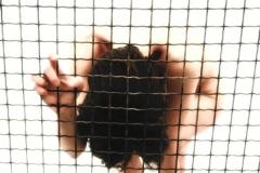 untitled 2002