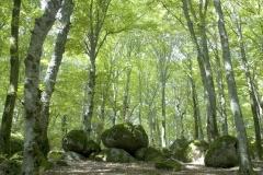 landscape 2010
