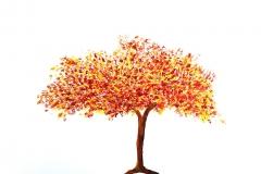 """""""il mio albero"""""""